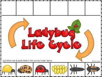 Ladybug Life Cycle Cut-n-paste