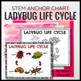 Ladybug Life Cycle Diagram   Printable & Digital