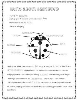 Ladybug Life Cycle Doodle Pages