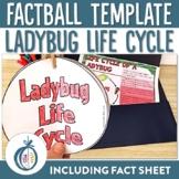Ladybug Life Cycle Factball and Comprehension Sheet