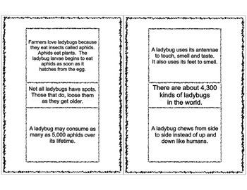 Ladybug Life Cycle Flip Booklet