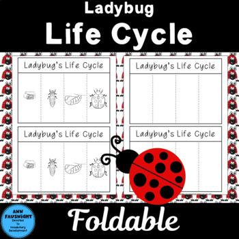 Ladybug Life Cycle Foldable