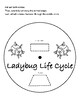 Ladybug Life Cycle Freebie