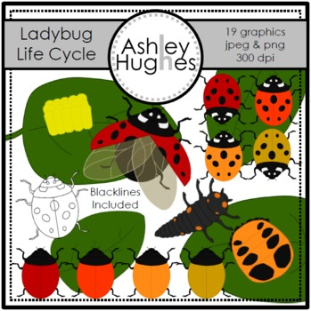 Ladybug Life Cycle Clipart {A Hughes Design}