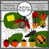 Ladybug Life Cycle Clipart [Ashley Hughes Design]