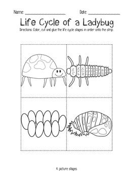 Ladybug Life Cycle Headband