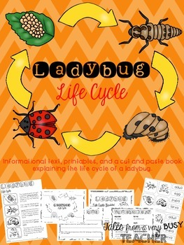 Ladybug Life Cycle {Informational Text, Printables, Cut & Paste Booklet}