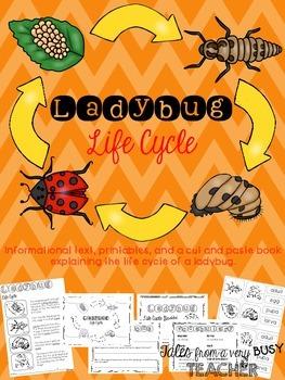 Ladybug Life Cycle {Informational Text, Printables, Cut &