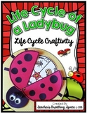 Ladybug Life Cycle --- Life Cycle Craft --- Ladybug Life Cycle Craftivity