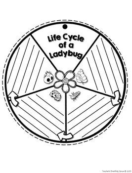 Ladybug Life Cycle Craftivity --- Ladybug Life Cycle Wheel