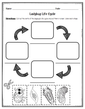 Ladybug Life Cycle Informational Text and Activity Sheets
