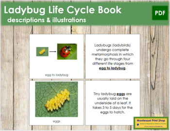 Ladybug Life Cycle Nomenclature Book