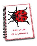 Ladybug Life Cycle Printables Pack