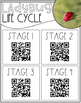 Ladybug Life Cycle {QR Codes}