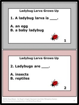 Ladybug Larva Grows Up