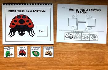 Ladybug Life Cycle Sequencing Activities