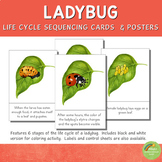 Ladybug Life Cycle Sequencing Cards and Posters