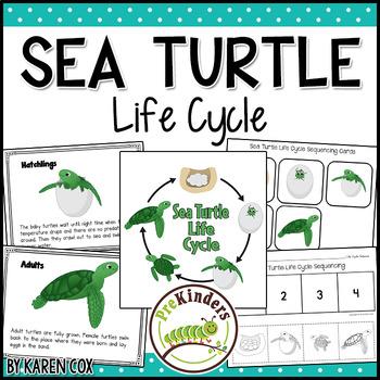 Sea Turtle Life Cycle Set