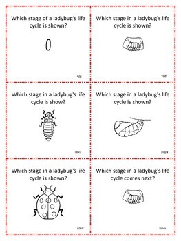 Ladybug Life Cycle Share Share Switch