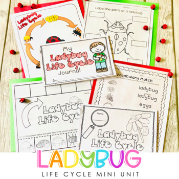 ladybug life cycle unit by traci bender the bender bunch tpt