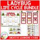 Ladybug Life Cycle Unit