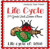 Ladybug Life Cycle Unit (Lesson Plans and Activities)