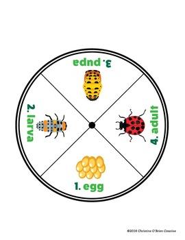 Ladybug Life Cycle Wheel Activity