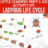 Ladybug Life Cycle Worksheets