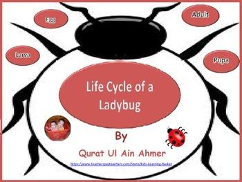 Ladybug: Life Cycle of a Ladybug: