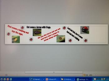 Ladybug Life cycle Banner