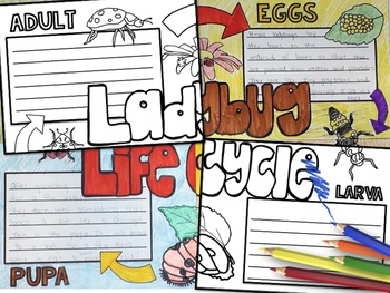Ladybug Life Cycle Activity: Collaborative Research Poster