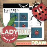 Ladybug Life Cycle Activity Directed Drawing