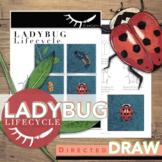 Ladybug Life Cycle Activity Directed Drawing