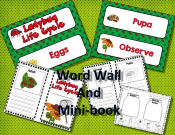 LADYBUG LIFE CYCLE - PowerPoint, Mini-Book, and Games
