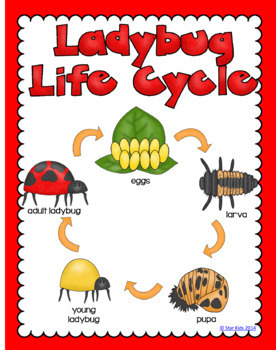 MATH AND SCIENCE ACTIVITIES - LADYBUG THEMED