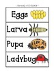Ladybug Math & Science Unit English & Spanish
