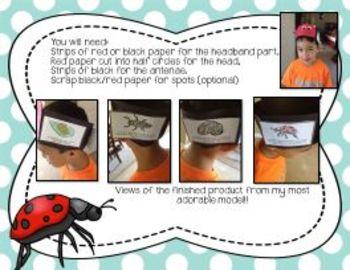Ladybug Mini-Science Study