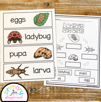 Ladybug Activities No Prep Math, Literacy and Science Pack
