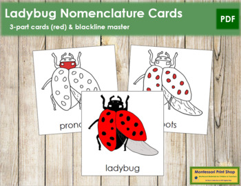 Ladybug Nomenclature Cards (Red)