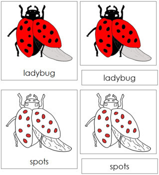 Ladybug Nomenclature Cards (Red)