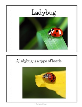 Ladybug Nonfiction Packet for Autism and Special Education