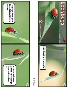 Ladybug Life Cycle and Nonfiction Unit