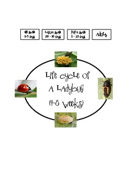 Ladybug Poem Craftivity with Graphic Organizers & Life Cycle Stages Freebie