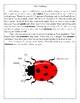 Spring STEM Activity - Ladybug Project