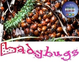 Ladybug SMART Board Presentation