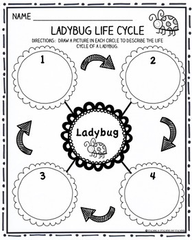 Ladybug Writing Activities:  Life Cycle, Facts Activity, Writing Prompt