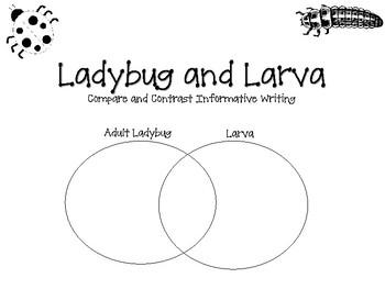Ladybug and Larva Informative Writing