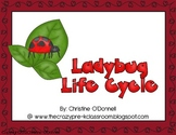Ladybug life cycle: teacher book, minibook, craftivity, anchor chart+