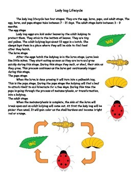 Ladybug lifecycle reading