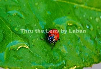 Ladybug on a Leaf Stock Photo #139